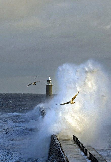 Lighthouse, waves, seagulls, sea