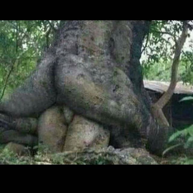 Whoa!!! Never saw trees like this....