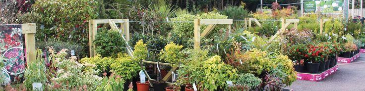 Badshot Lea Garden Centre - plants, gifts, restaurant, crafts, pets