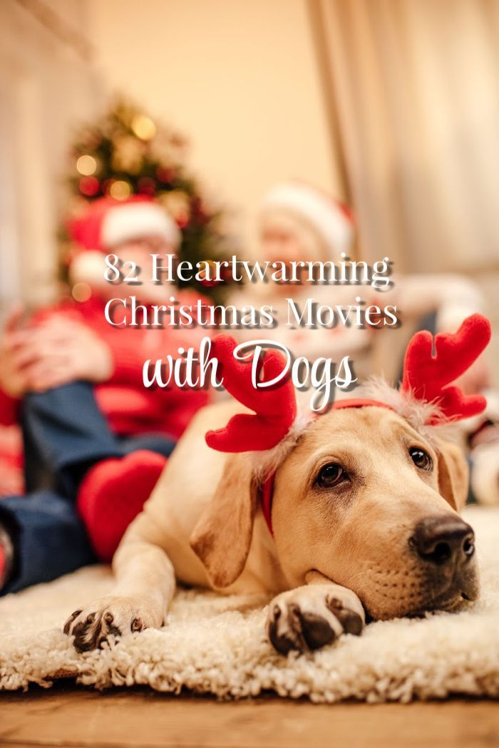 The Everyday Dog Mom 82 Heartwarming Christmas Movies With Dogs Dogs Dog Best Friend Dog Mom