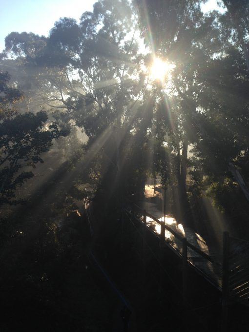 Winter sun filtering through the trees in the Dandenong Ranges
