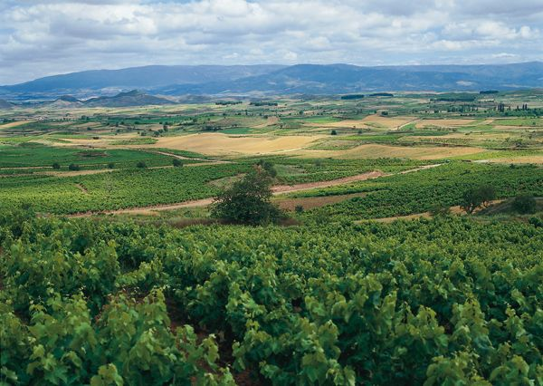 Rioja - Wein hervorragender Qualität aus dem Baskenland! Die zuweilen gewaltigen Rotweine gehören zu den besten der Welt.