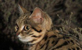 1000+ images about KITTY KATS on Pinterest | Kittens ...