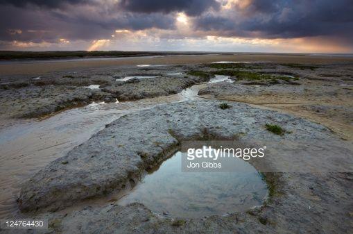 Image result for salt marshes