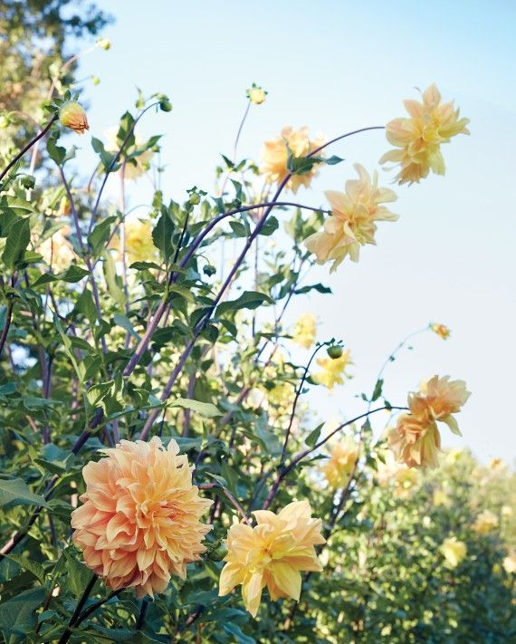 Brilliant Garden Flower Names This Pin And More On Gardenflower For Design Inspiration