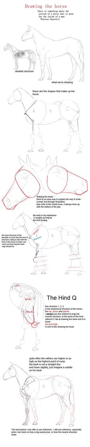 drawing a horse by YOB.deviantart.com on @deviantART: