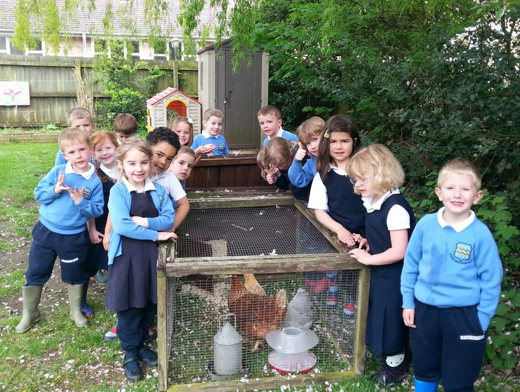 The Reception class at Pocklington Pre-Prep were amazed to find 3 chickens waiting for them this morning.  Farmer Jack left them a letter asking them to care for his chickens while he is away. The first egg caused great excitement.