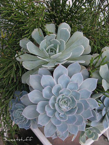 4107 Best Succulents Images On Pinterest Succulents