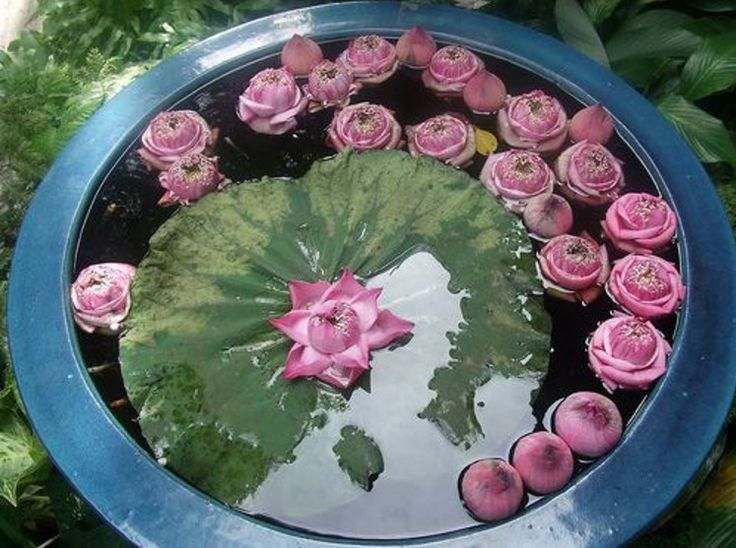 286 best 1 images on pinterest - Small water gardens in containers ...