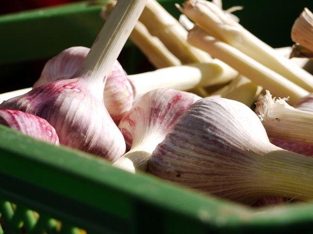 Frischer Knoblauch ist das beste Naturheilmittel. http://vita-invest.de/frischer-knoblauch-ist-das-beste-naturheilmittel/