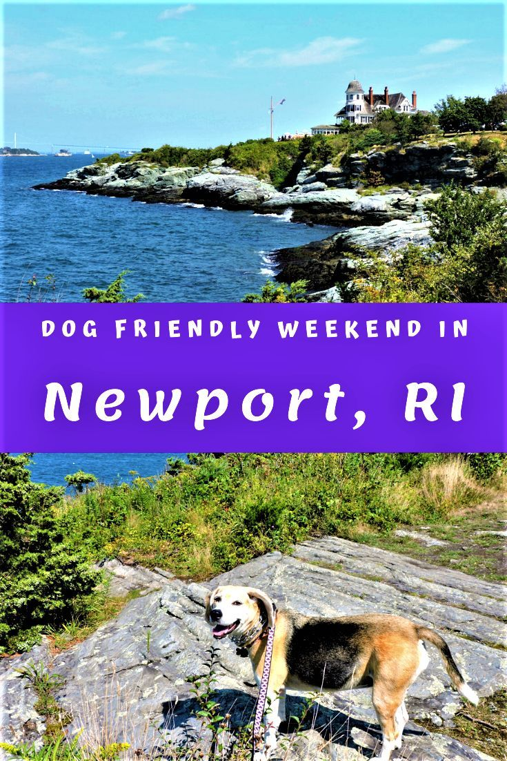 Weekend In Newport With A Dog Cool Places To Visit Travel Around The World Dog Friendly Hotels
