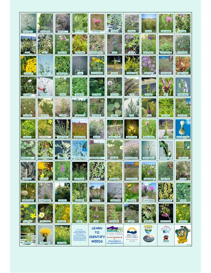 landscaping scope of work template - 17 best boat garden images on pinterest gardening