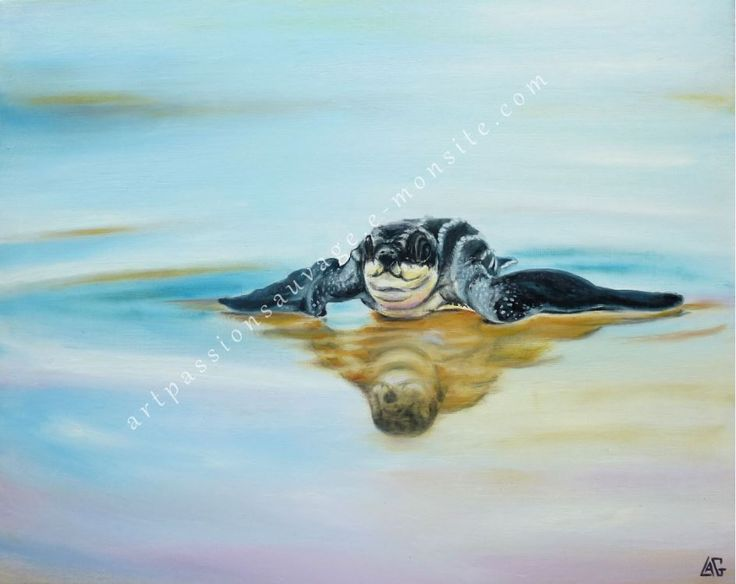 Bébé tortue luth