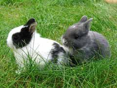 Caring For Rabbits: Top 10 Tips To Help