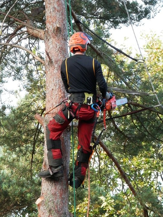 It might sound simple, but removing a tree from your property isn't just a matter of having a tree, cutting it and removing it. Our trade and safety qualified team of tree loppers and arborists can come to your home or business to assess your tree removal needs whether it is tree removal, tree lopping, stump grinding or cosmetic tree pruning. We offer a wide range of tree services even emergency after hours tree lopping and removal.  https://plus.google.com/111375780864423663618