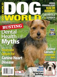 Crash Course on CalciumImage of Dog World's February issue  When you feed a homemade diet, adding the right amount of calcium is vital. There should always be more calcium than phosphorus. Recommended rations for dogs range from 1-to-1 to 2-to-1 calcium to phosphorus. If calcium and phosphorus are not properly balanced in the diet, the body pulls calcium from the dog's bones to make up for that deficiency, leaving them weakened.