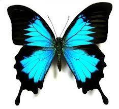 Resultado de imagen para dibujos de mariposas faciles