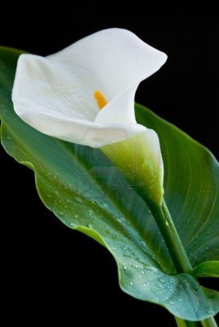 91 best images about flores
