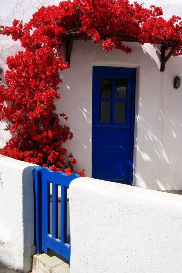 Red bougainvillea, Tinos, Greece