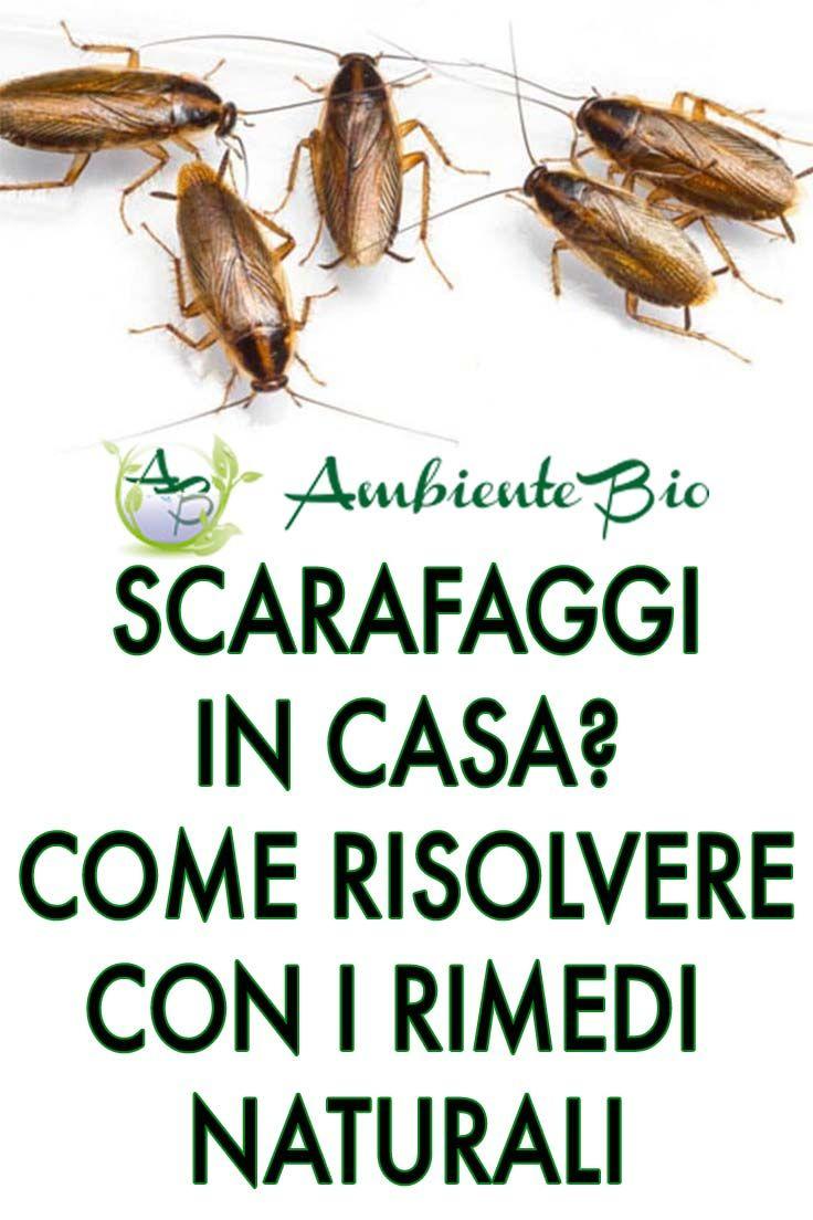 Piccoli Scarafaggi In Cucina come eliminare gli scarafaggi dalle vostre case, per sempre