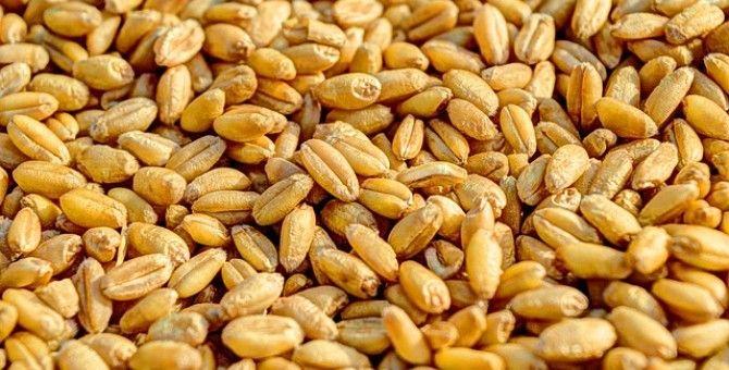 seed food 5