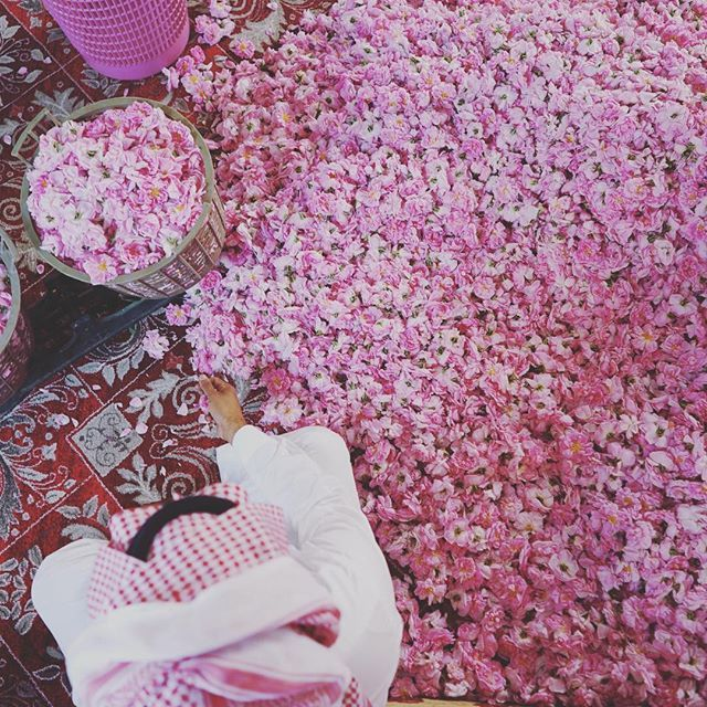 Taif Rose Festival. Taif, Saudi Arabia. Middle East