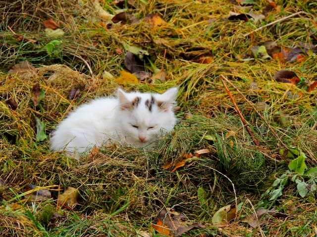 Котенок в сене