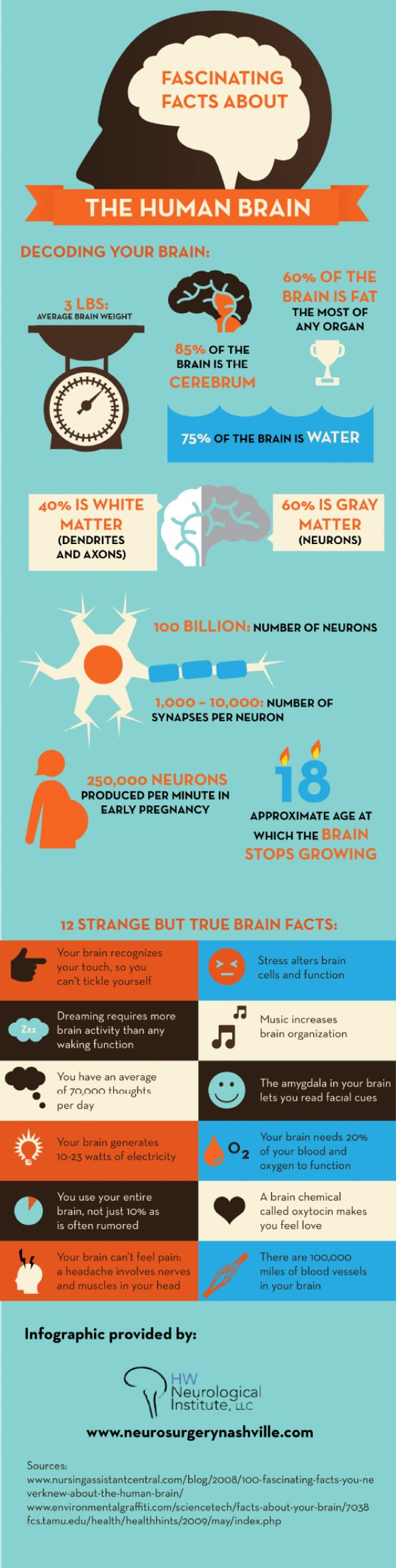 113 best brains images on pinterest neurology neuroscience and fascinating facts about the human brain infographic science neuron stress fandeluxe Image collections