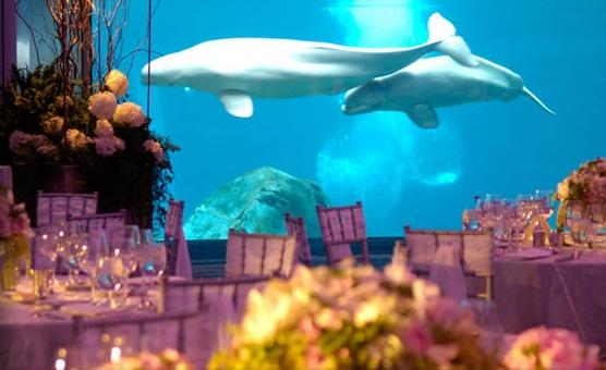Reception at Georgia Aquarium... yes please