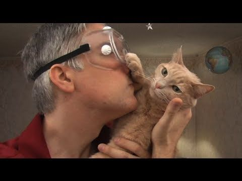 An Engineer's Guide to Cats 2.0, A Sequel Instructional Video About Cats