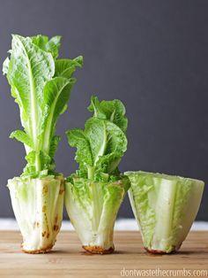Économiser de l'argent par la repousse ces 10 aliments qui repoussent dans l'eau sans la saleté.  Parfait si vous ne disposez pas de place pour un jardin et en essayant de sauver un peu d'argent!  Repousser la laitue, céleri ... repousser repousser les légumes avec l'un des meilleurs conseils budgétaires de l'année, et facile pour quiconque de le faire!  :: DontWastetheCrumbs.com