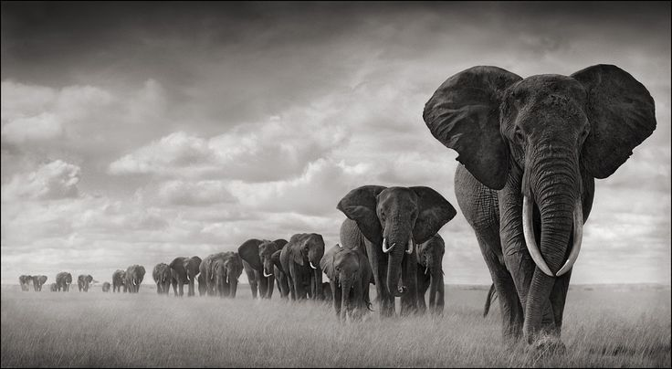 Nick Brandt: African wildlife photography