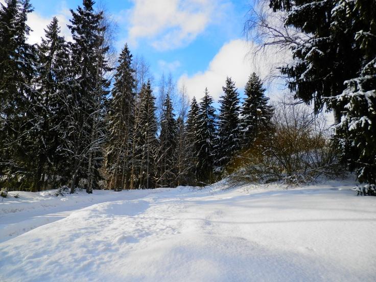 """Saunakallio,Finland  """"Before you walk into the woods"""""""