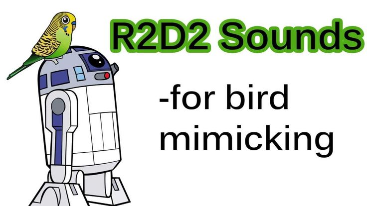 R2D2 Sounds for bird mimicking