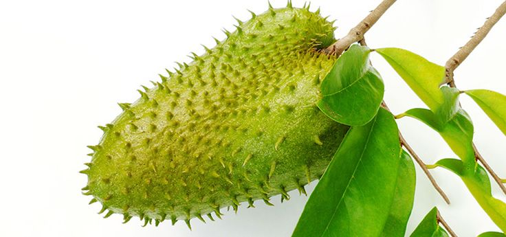 What would you do if you found out that the soursop fruit could keep the rogue cells of 12 different types of cancer in check?