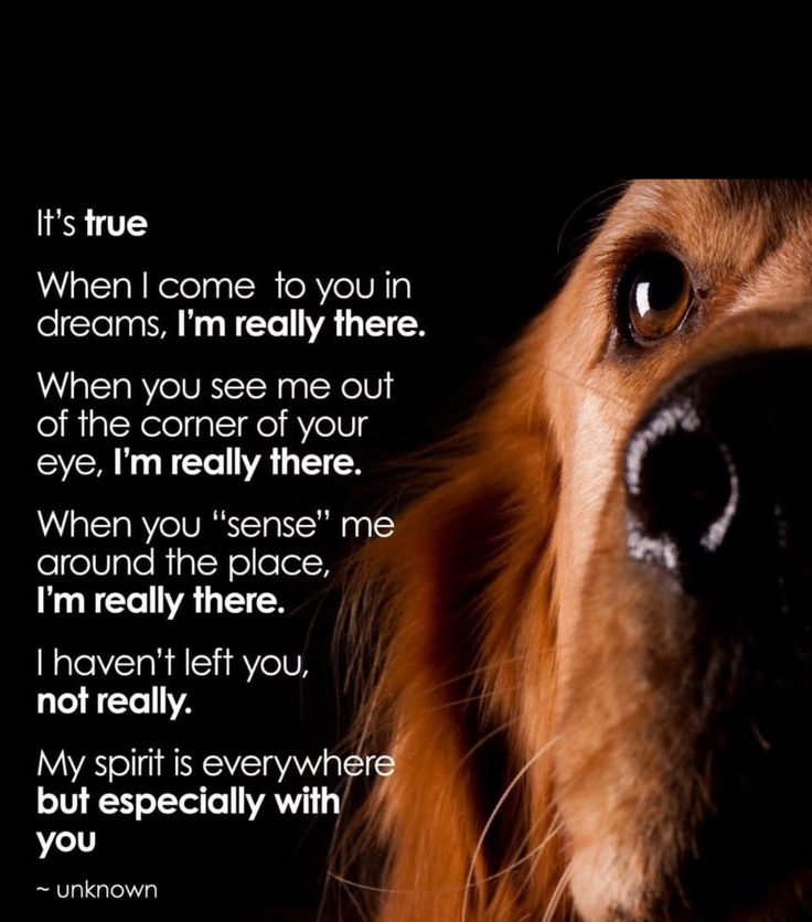 Pin by Always Dobies on ALWAYS IN MY HEART Dog poems