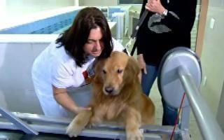 Animais domésticos ganham mais qualidade de vida com o avanço da tecnologia - GloboNews - Vídeos do Jornal das Dez - Catálogo de Vídeos