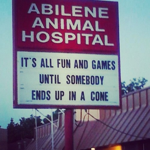 Not the cone!: Funny Signs, Dogs Humor, Funny Stuff, So True, Fun Games, Pet Humor, So Funny, Hospitals Humor, True Stories