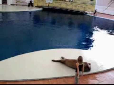 dancing walrus-Smooth criminal micheal jackson - I love this! <3