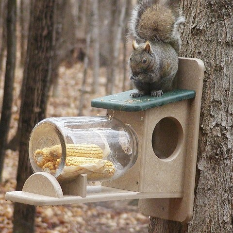 Build Squirrel Feeder Jar Woodworking Projects Amp Plans