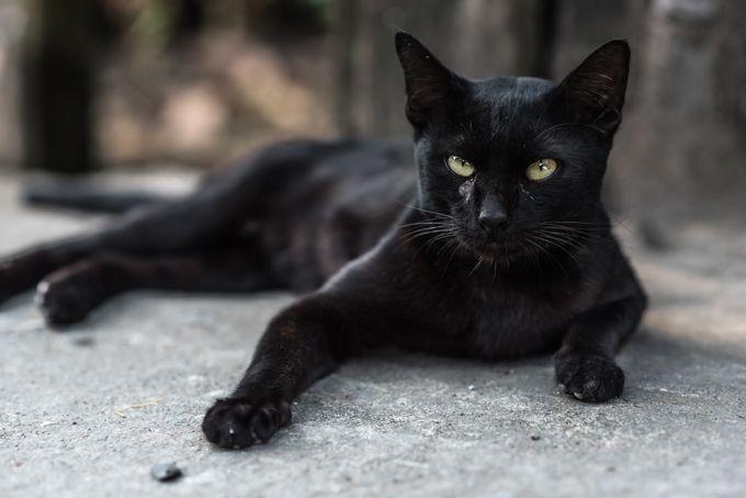 Cat names, names for black cats, black cat names.