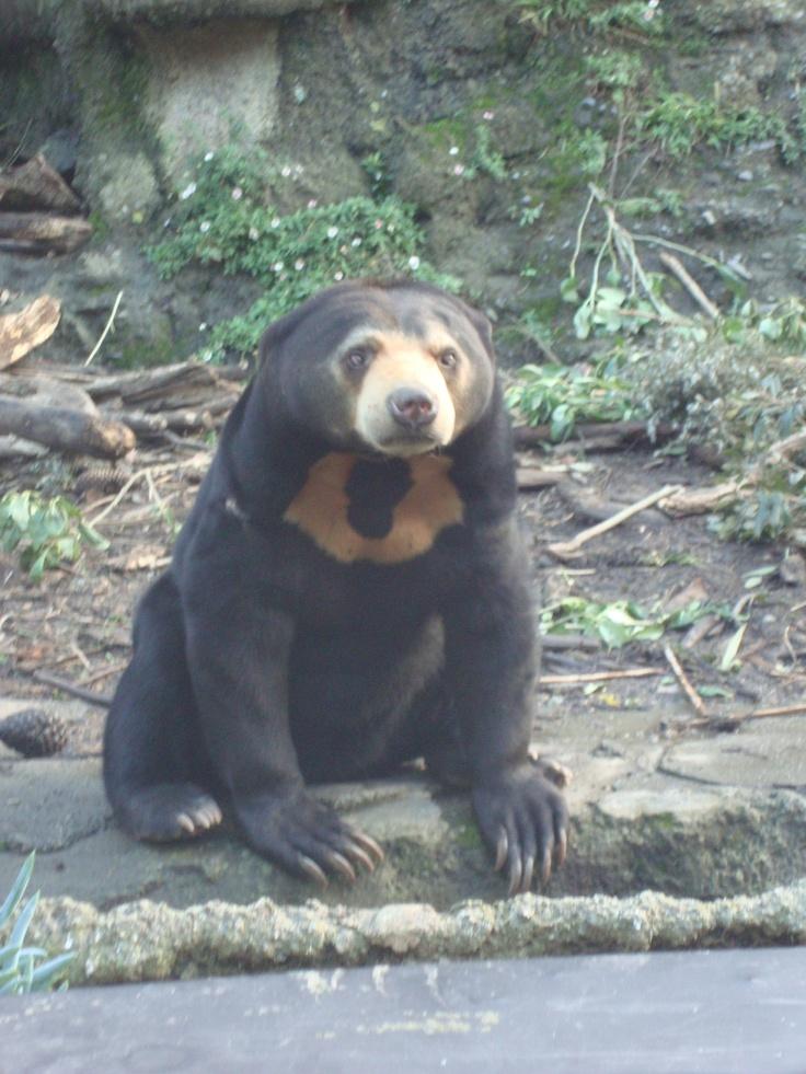 Sun Bear! Wellington Zoo