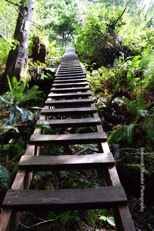 West Coast Trail Ladder (one of many) #NaaiAntwerp