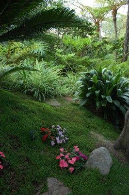 terreno em declive plantado