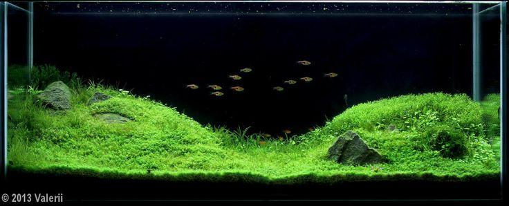 2013 AGA Aquascaping Contest - Entry #112