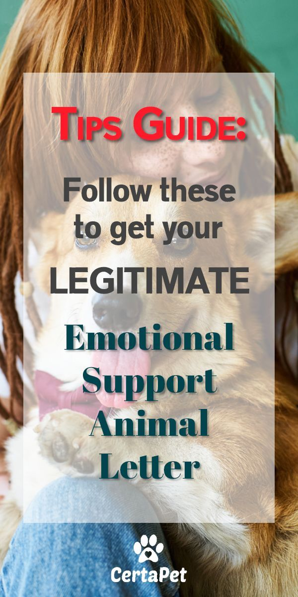Who knew your completely LEGITIMATE Emotional Support Animal ...