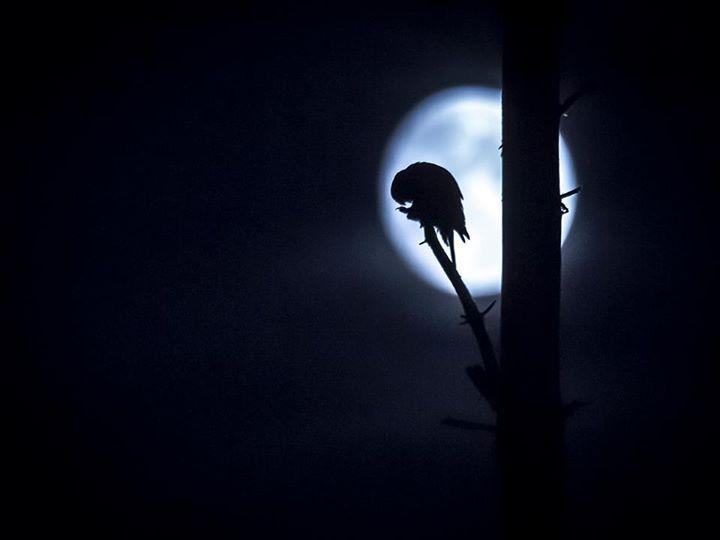 https://www.facebook.com/torpedoowl Gotham City can sleep safely. Torpedo Owl is watching...