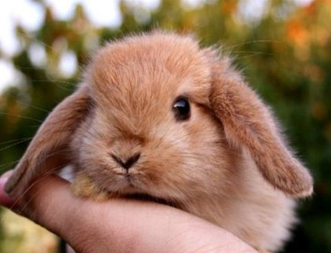 Груминг кроликов: стрижка, купание и уход за декоративными кроликами | Декоративные животные | Royal-groom