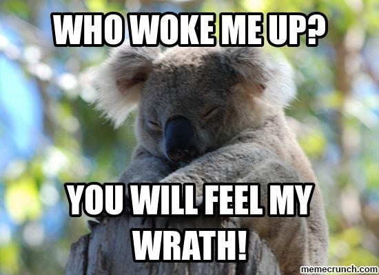cute koalas memes | image.jpg
