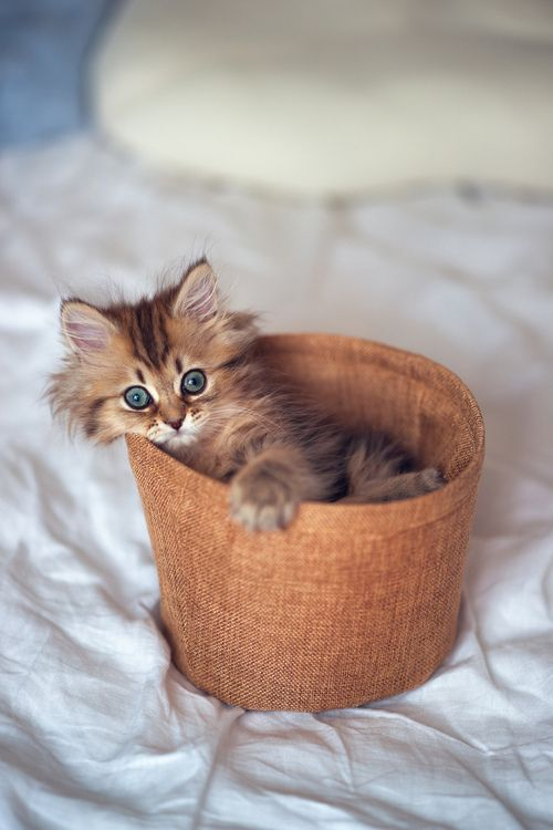 I''m allergic to cats, but this kitten is too cute!!